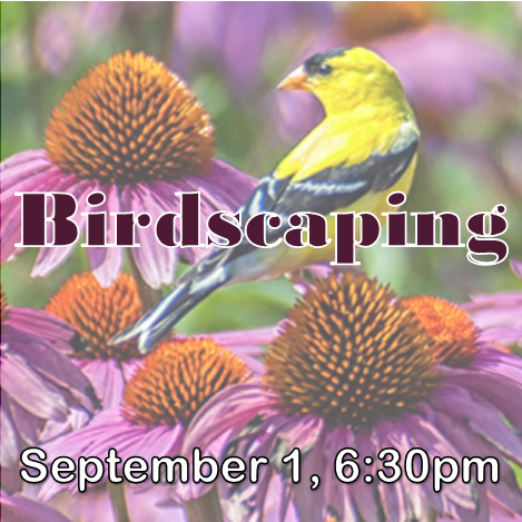 Learn what makes your yard appealing to birds and take a walk in the gardens with an experienced birder to see the interaction of landscaping and birding!