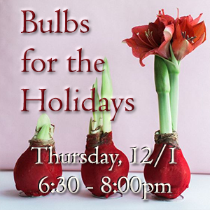 Bulbs for the Holidays
