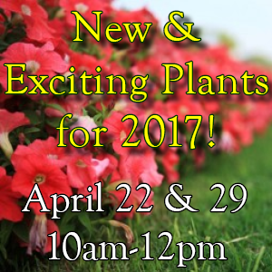 New and Exciting Plants for 2017!
