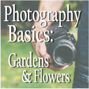 Photo Basics: From Gardens to Flowers