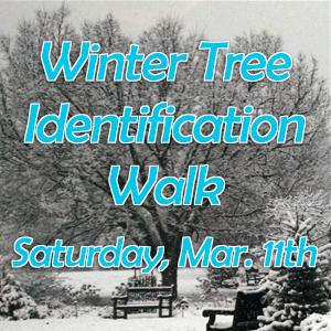 Winter Tree Identification Walk