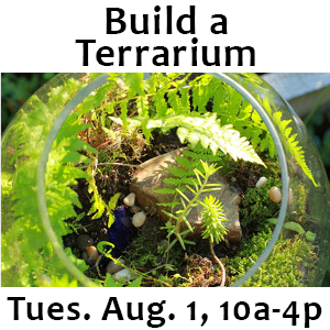 Build a Terrarium Tues. Aug. 17 10a-4p