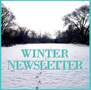 Winter Newsletter Icon