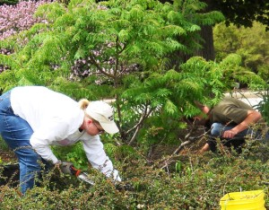 Adult Education - Pulling Weeds