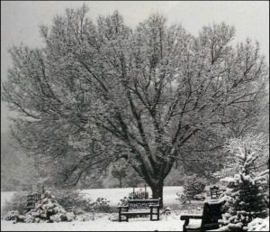 Winter picture 1
