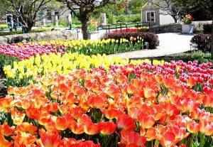 Friends Of Boerner Botanical Gardensimproving Your Garden Design With Photography