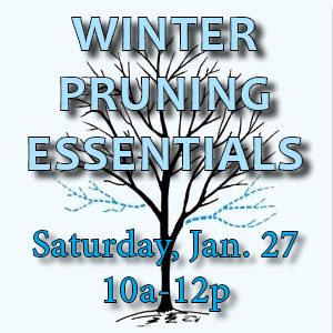 Winter Pruning Essentials, Saturday Jan. 27 10a-12p