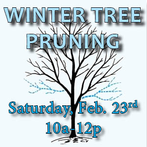 Winter Tree Pruning 19 web icon