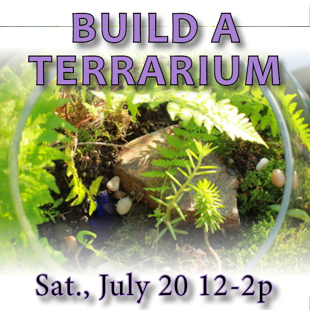 Build a terrrarium web updated